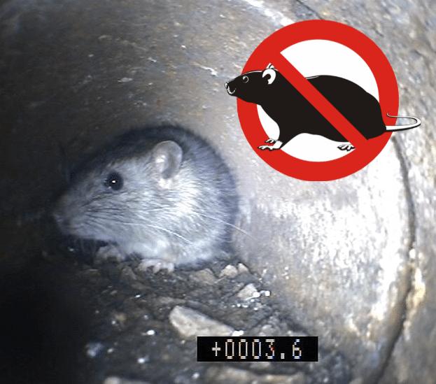 pest control berkhamsted