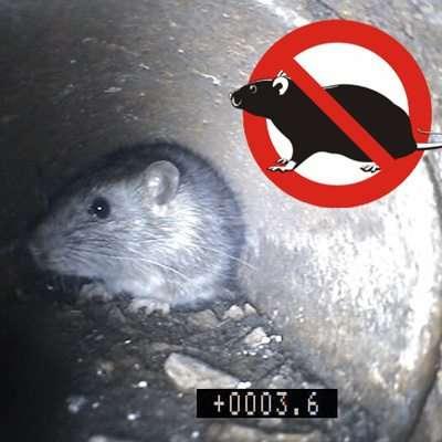 Rat Extermination London